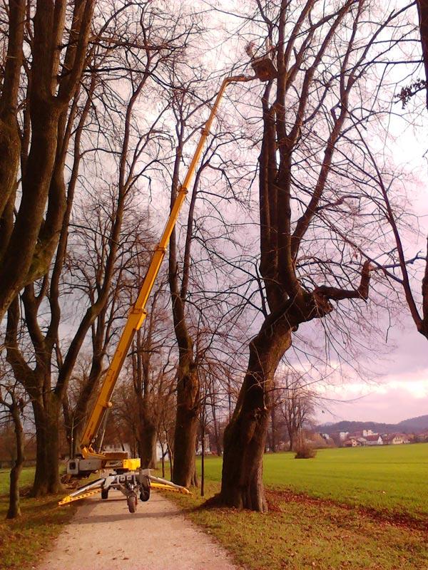 obrezovanje-drevja-na-visini.jpg
