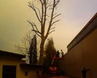 obrezovanje-drevja.jpg