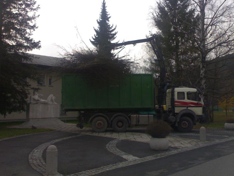 obzagovanje-drevja.jpg