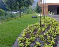 okrasne-zasaditve-2.jpg