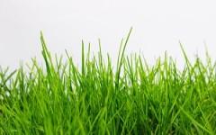 vzdrževanje-zelenice